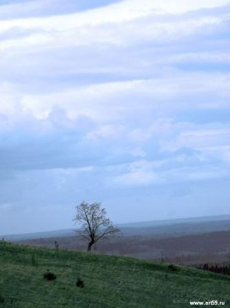 Дерево | art59.ru
