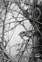 Птенец синицы | art59.ru