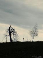 Деревья | art59.ru